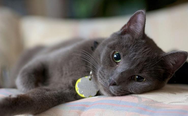 Γαλλία: Yποψήφια στις δημοτικές εκλογές μία… γάτα