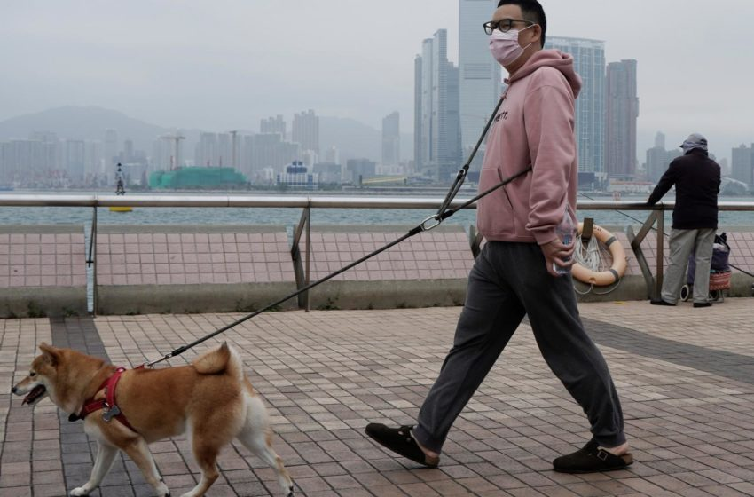 Ο ευρηματικός τρόπος να βγάζεις τον σκύλο εν μέσω καραντίνας (vid)