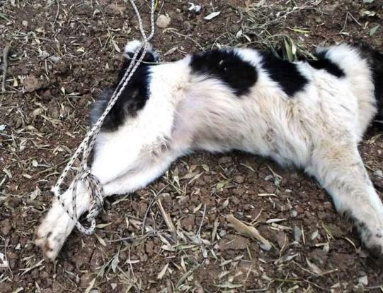 """""""Κτήνος"""" έδεσε σκύλο και τον άφησε να πεθάνει"""