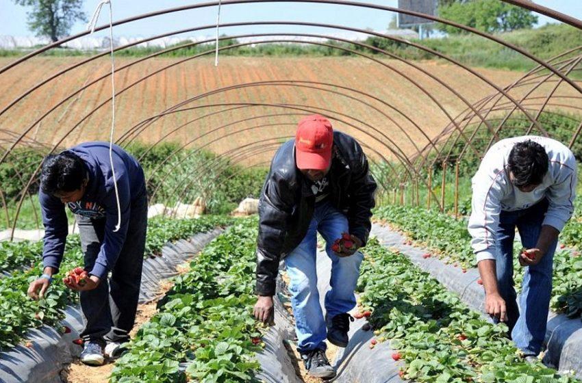 Manolada Watch: Άθλιες συνθήκες χωρίς μέτρα προστασία για χιλιάδες εργάτες στα φραουλοχώρα