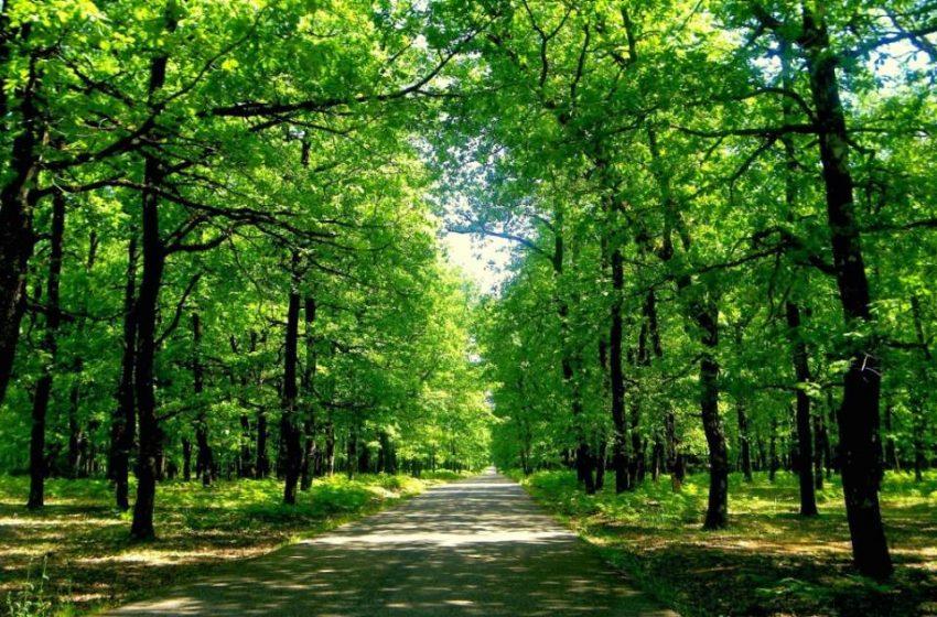 Παράταση απαγόρευσης εισόδου σε δάση έως τις 20 Αυγούστου