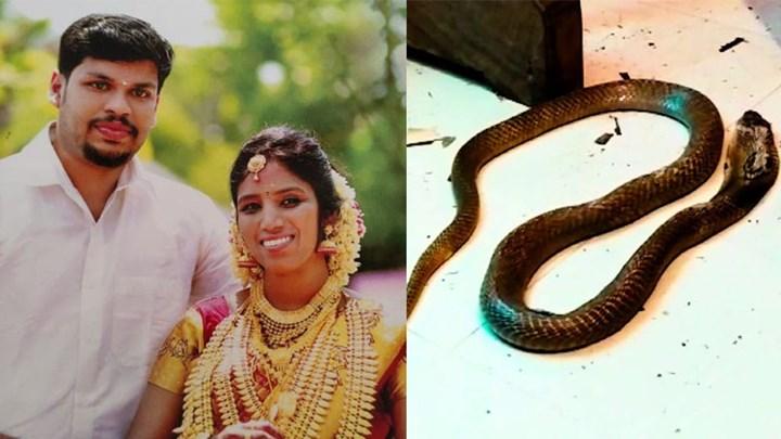 Απίστευτο έγκλημα στην Ινδία: Χρησιμοποίησε δύο φίδια για να σκοτώσει τη γυναίκα του