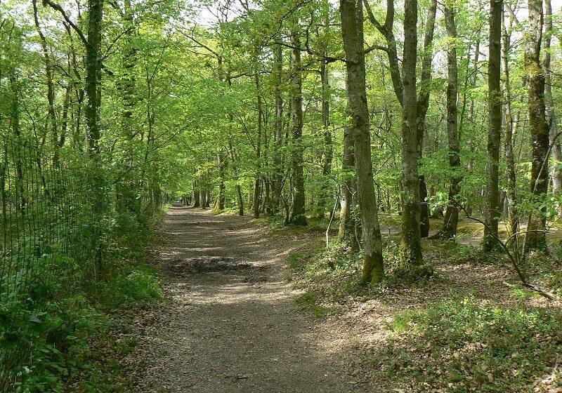 Παρατείνεται η απαγόρευση της μετακίνησης σε δάση