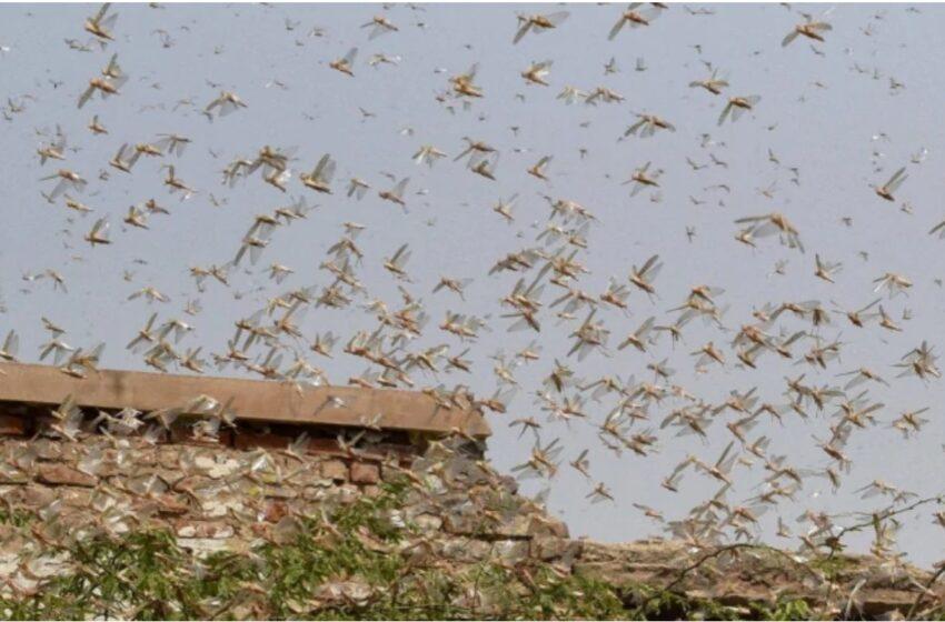 Αργεντινή: Επιδρομή εκατομμυρίων ακρίδων –  Τεράστιες καταστροφές στην παραγωγή σόγιας (vid)