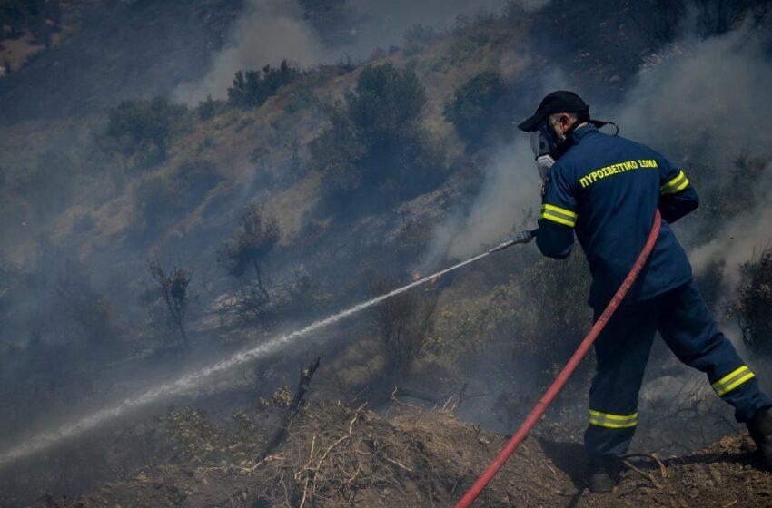 Δασική πυρκαγιά στην Εύβοια – Μεγάλη κινητοποίηση της πυροσβεστικής