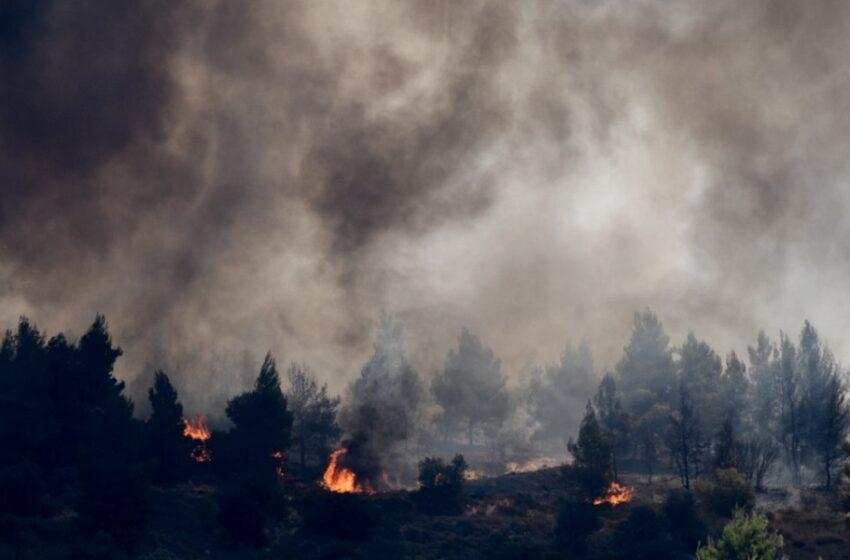 Κεχριές: Σε ύφεση η φωτιά – Τεράστιες καταστροφές