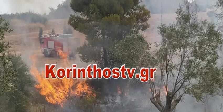 Φωτιά στις Κεχριές Κορινθίας (vid)