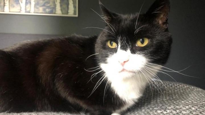 Ο Πάλμερστον, ο γάτος του Φόρεϊν Όφις, βγαίνει στη σύνταξη