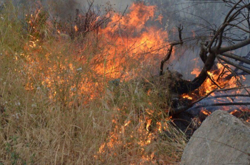 Φωτιά σε δάσος στη Μάνη