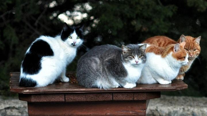 Έρευνα για σκύλους και γάτες: Μεταδίδουν τον κοροναϊό;