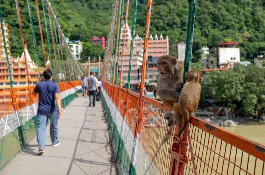 Έμπλεξε: Γαλλίδα φωτογραφήθηκε γυμνή σε ιερή γέφυρα στην Ινδία και συνελήφθη
