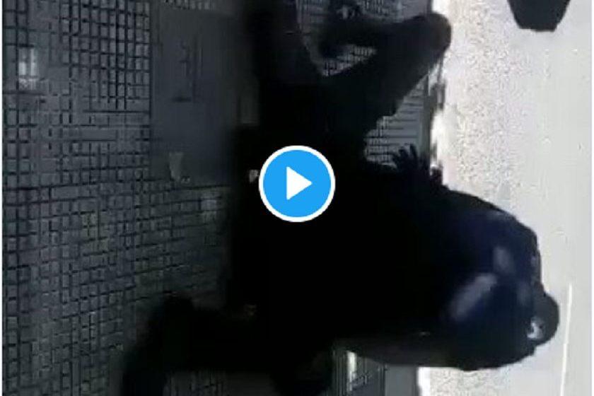 Χωρίς τέλος: Αστυνομικός πατάει στο λαιμό 14χρονο επειδή δεν φοράει μάσκα (vid)