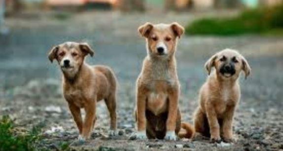 Πρωταγωνιστής έσωσε σκυλάκι που το είχαν πετάξει στα σκουπίδια (vid)