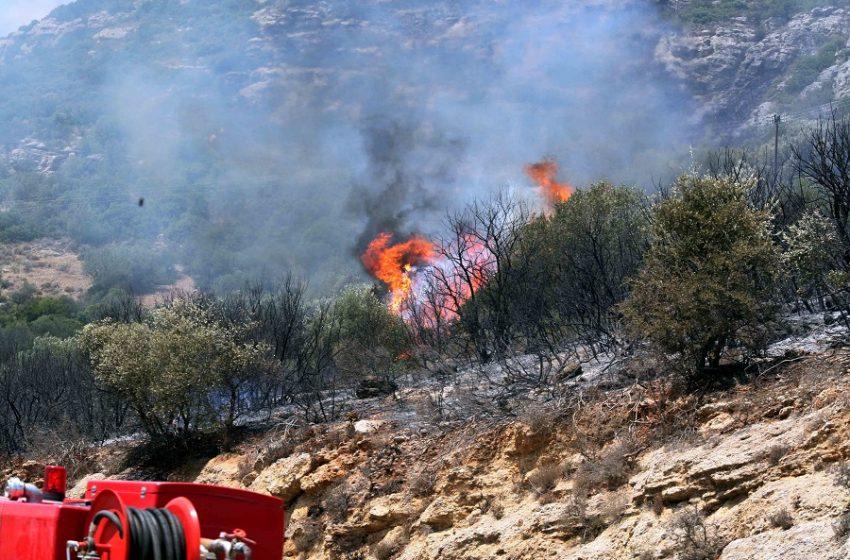 Φωτιές σε Ηλεία και Λακωνία