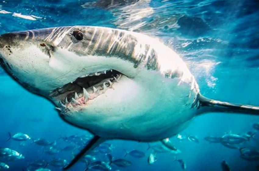 Νέα έρευνα: Στο συκώτι του καρχαρία το μυστικό για τον κοροναϊό (vid)