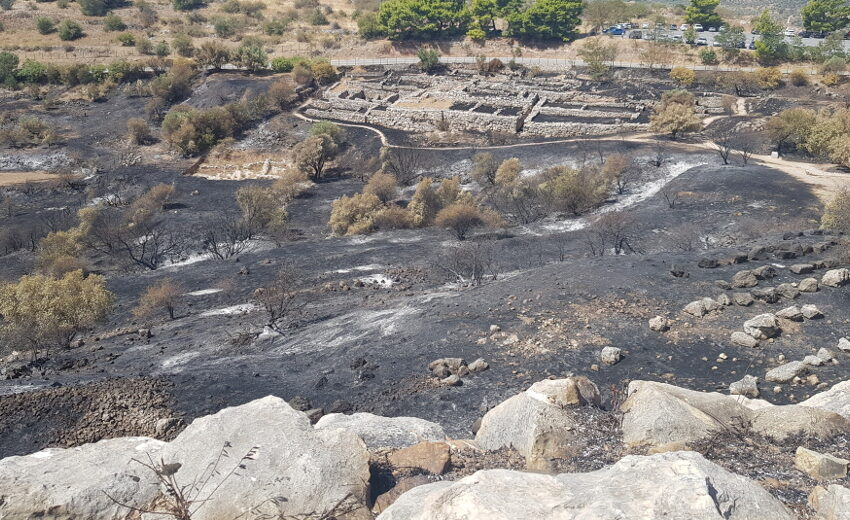 Φωτορεπορτάζ της ΕΦΣΥΝ στις Μυκήνες: Αυτή είναι η εικόνα που αντικρίζει κάποιος μετά τη φωτιά