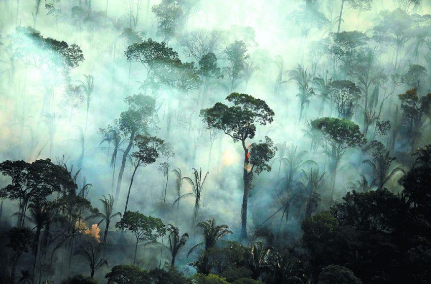 Αγωνία για τον Αμαζόνιο που κινδυνεύει να μετατραπεί σε λιβάδι