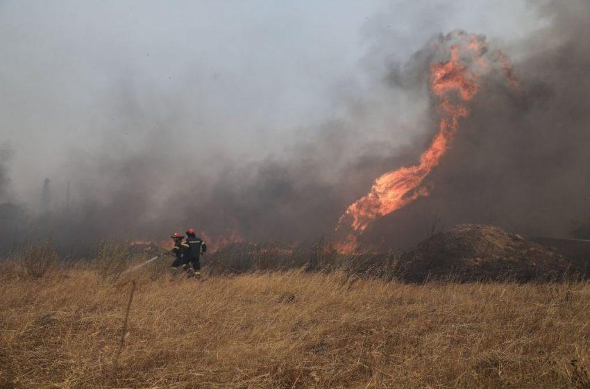 Φωτιά τώρα στην Ηλεία – Ισχυρές πυροσβεστικές δυνάμεις