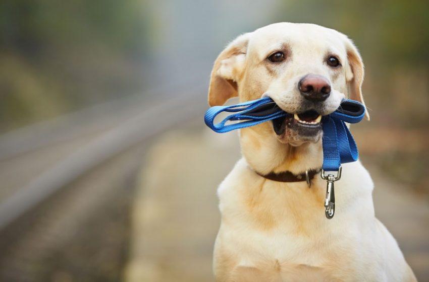 Βόλτα με τον σκύλο μετά τις 12:30 ; Ξεχάστε το…