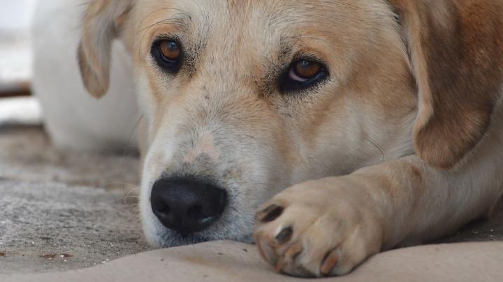 Αυστηροποίηση των ποινών για τους βασανιστές ζώων μετά την κτηνωδία στα Χανιά