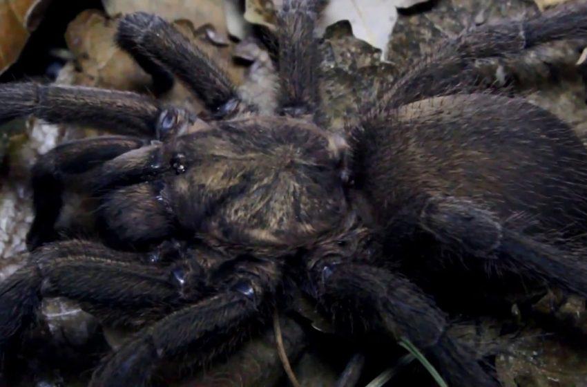 """Ιστός αράχνης έχει τρελάνει το δίκτυο – Θα… """"παγίδευε"""" και άνθρωπο (εικόνα)"""