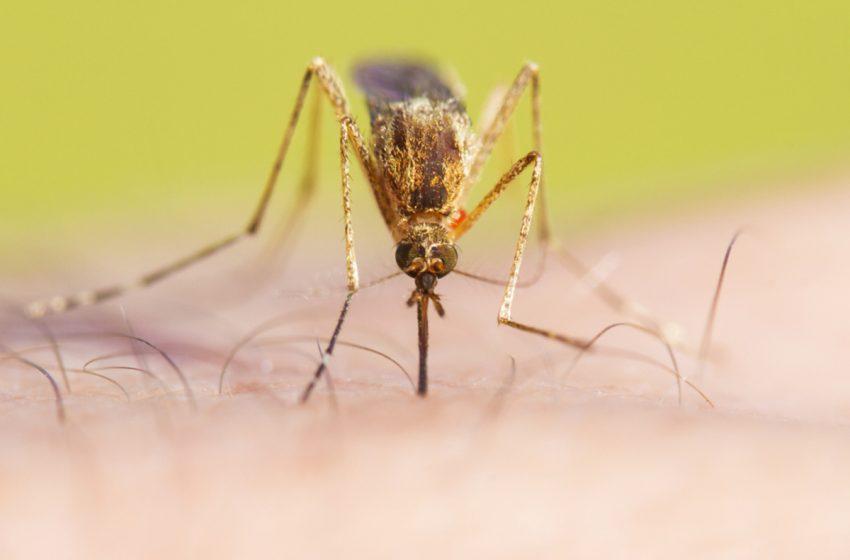 Μελέτη: Μεταδίδουν τα κουνούπια τον κοροναϊό όταν τσιμπήσουν ασθενή;