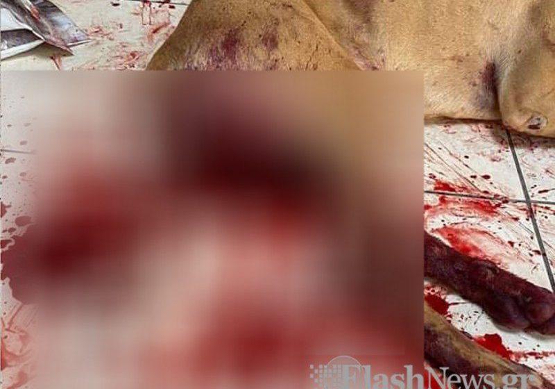 Κτηνωδία στα Χανιά: Κρύβεται ο δράστης – Βασάνισε και κρέμασε ζωντανό το σκυλάκι που ήθελε να παίξει μαζί του (vid)
