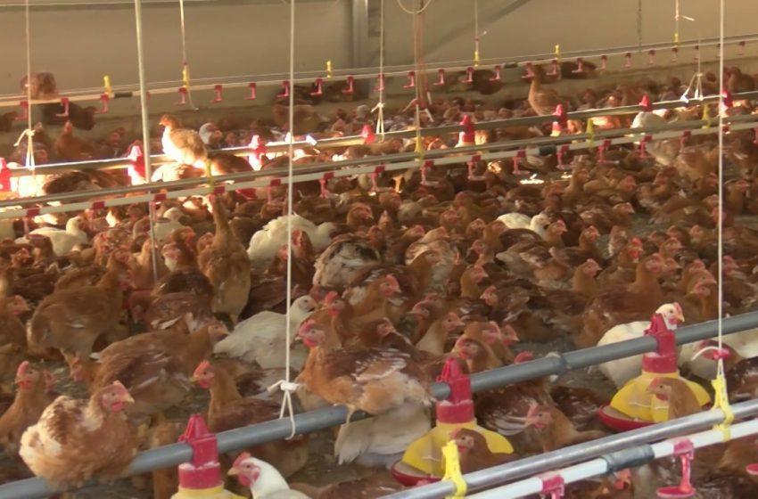 Γιάννενα: Πολλά κρούσματα κοροναϊού σε πτηνοτροφική μονάδα