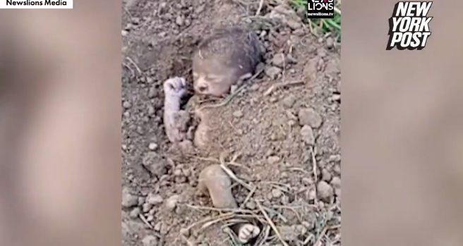 Συγκλονιστικές εικόνες: Ξεθάβουν νεογέννητο και το σώζουν τελευταία στιγμή (vid)