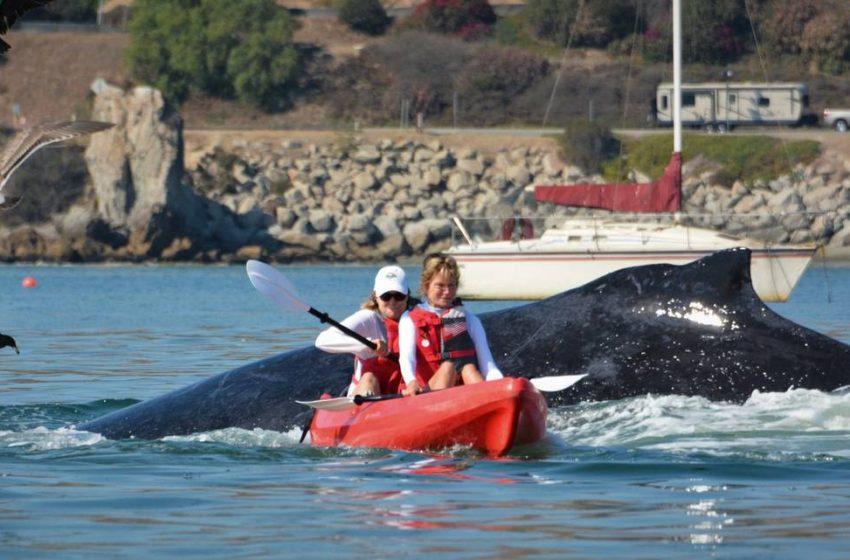 Σοκάρει βίντεο με φάλαινα και δύο ανέμελες γυναίκες με κανό στην Καλιφόρνια