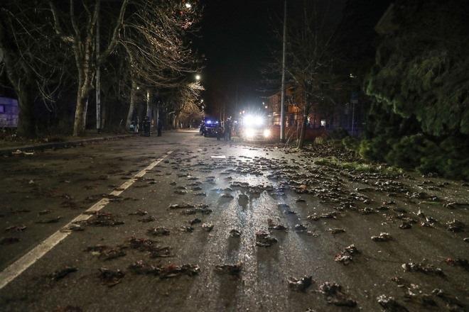 Βράδυ Πρωτoχρονιάς: Τα πυροτεχνήματα σκότωσαν εκατοντάδες πουλιά – Γέμισαν οι δρόμοι της Ρώμης (εικόνες, vid)