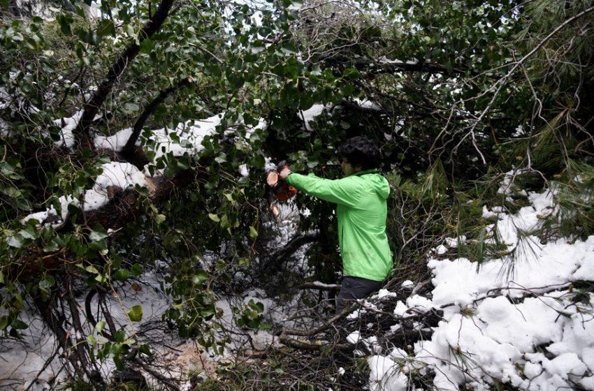 Μήδεια: Για 5η μέρα χωρίς ρεύμα 3.000 σπίτια στην Αττική