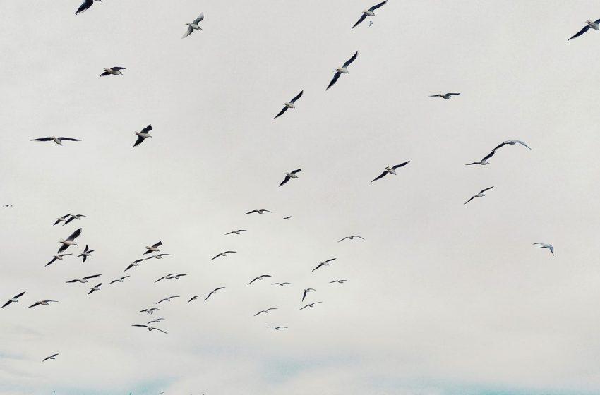 """""""Πτήσεις"""" ελευθερίας"""