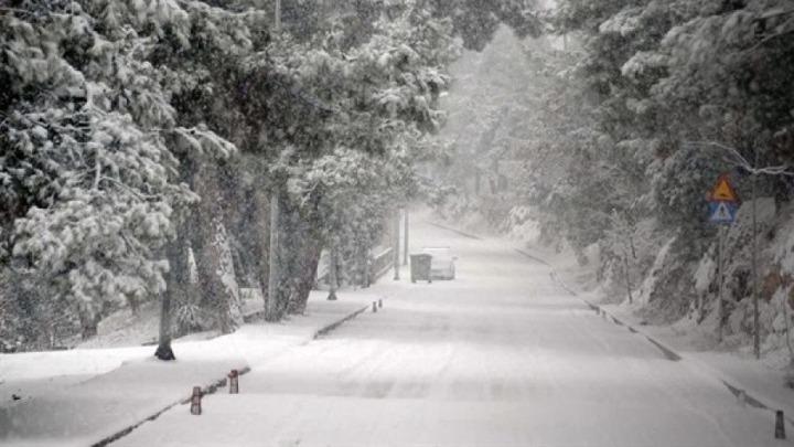 """Ανάλυση ειδικών για την """"Μήδεια"""": Το χιόνι ήταν πιο υγρό και βαρύ, γι'  αυτό έπεσαν τα δέντρα"""