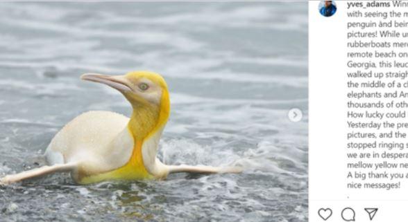 Viral: Φωτογράφος απαθανάτισε σπάνιο κίτρινο πιγκουίνο