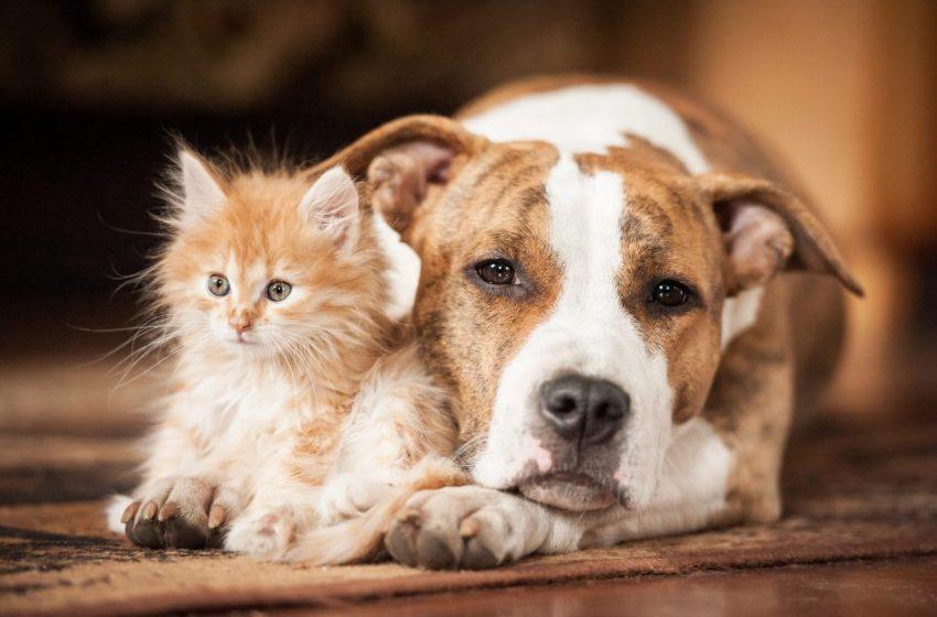 Σε σκύλους και γάτες ανιχνεύθηκε η βρετανική μετάλλαξη του κοροναϊού