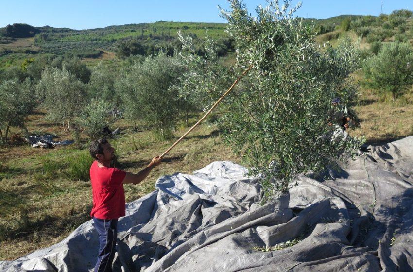 Εστίαση: Ντόμινο και σε άλλους κλάδους – Αγανακτισμένοι οι παραγωγοί ελαιόλαδου