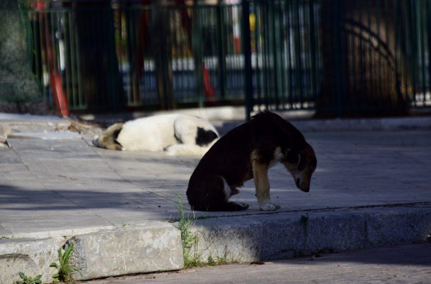 Κτηνίατροι δημοσίου: Πυρ και μανία με το ν/σ για αδέσποτα και ζώα συντροφιάς – Που έγκειται η διαφωνία