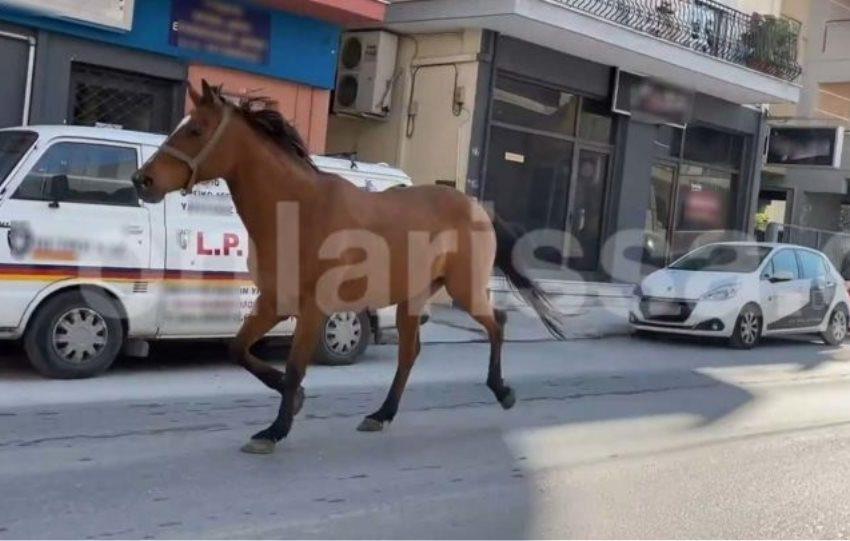 Λάρισα: Άλογο έκανε βόλτα στους κεντρικούς δρόμους (video)