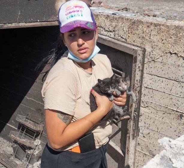 Φωτιά Σχίνος: Χιλιάδες ζώα κάηκαν ζωντανά  (σκληρές εικόνες)