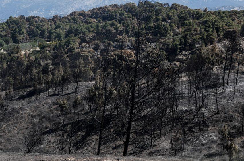 Φωτιά σε Κορινθία: Το πριν και το μετά της απόλυτης καταστροφής σε Σχίνο και Αλεποχώρι  (vid)