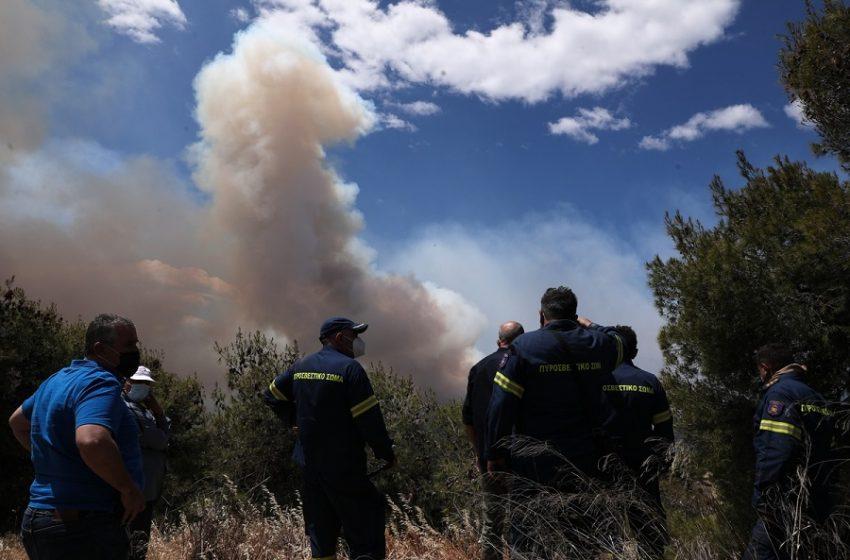 Φωτιά στο Σχίνο: Εδώ ξεκίνησε η καταστροφική πυρκαγιά (vid)
