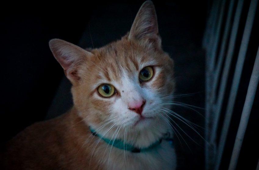 Κτηνωδία – Σκότωσε γάτα και μετά έλεγε: Όποιος θέλει να μου ζητήσει το λόγο