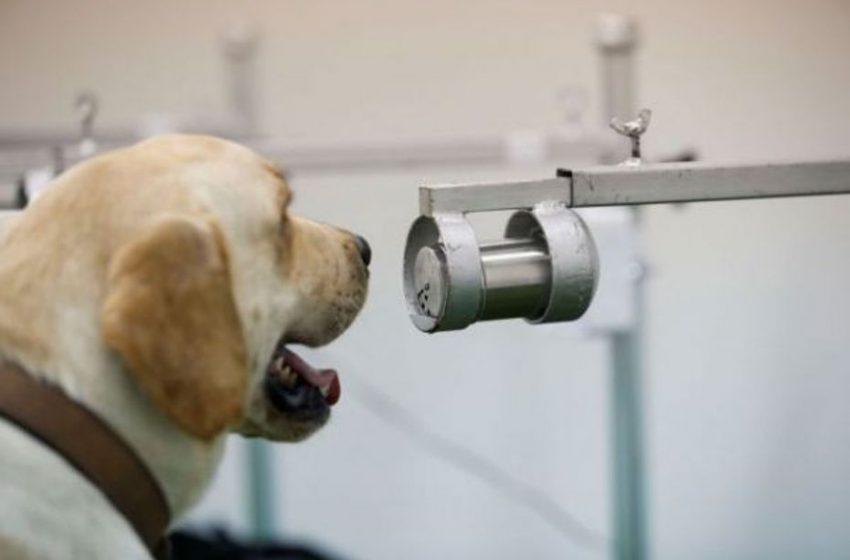Νέος κοροναϊός από τους σκύλους – Τι δείχνει μελέτη