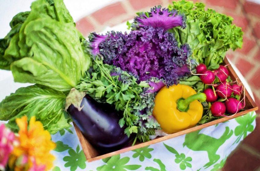Φυτοφάγοι: Το μεγάλο πλεονέκτημα έναντι των κρεατοφάγων