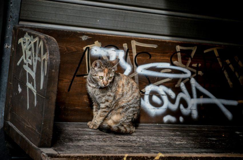 """""""Αυτοάμυνα"""" επικαλέστηκε ο παπάς που σκότωσε τη γάτα στο Βόλο με το σκουπόξυλο"""