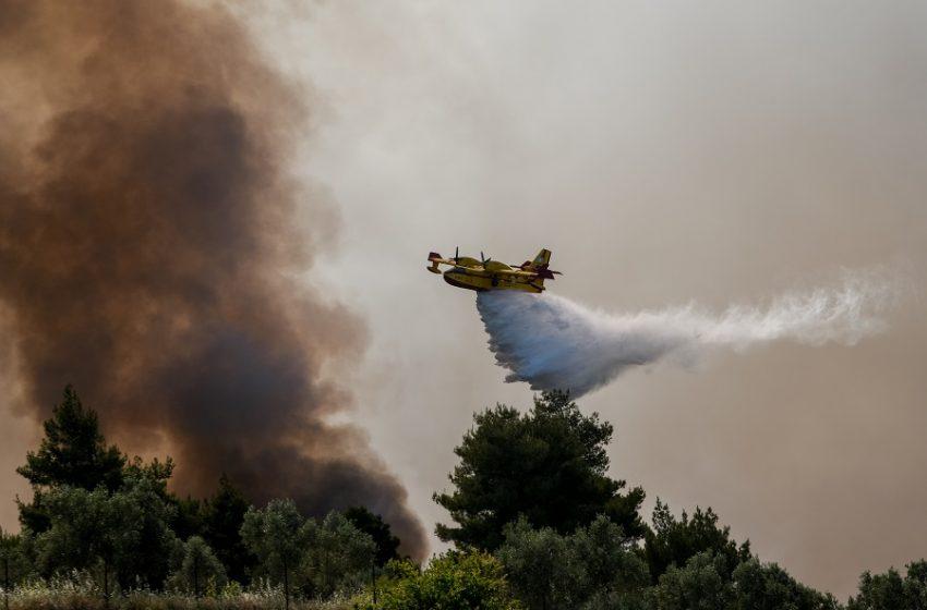 Ηλεία: Πυρκαγιά σε δασική έκταση κοντά στην Κυανή Ακτή