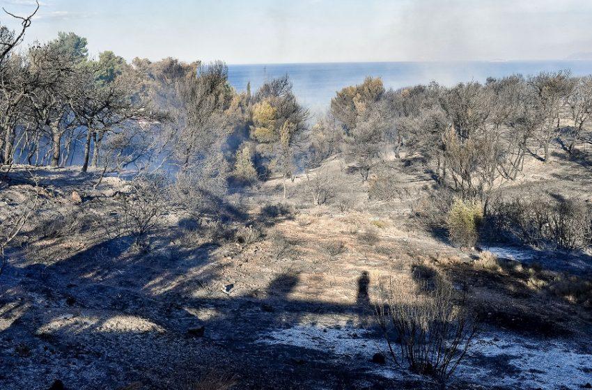 Υπό έλεγχο η πυρκαγιά στα Καλύβια