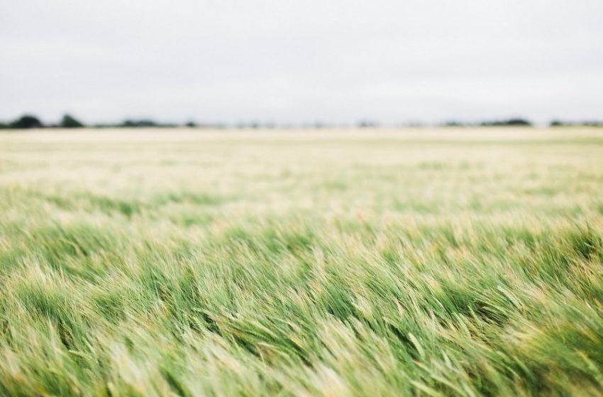ΗΠΑ: Επελαση ακρίδων μετά την ξηρασία