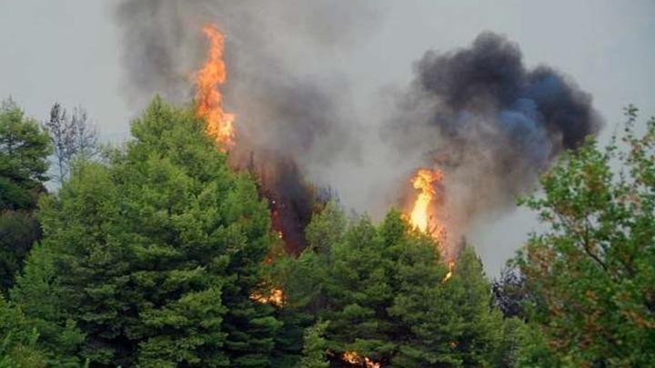 Πυρκαγιά στις Γούβες Ηρακλείου